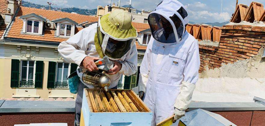 Green Hotel Florence Nice, a roof for our bees