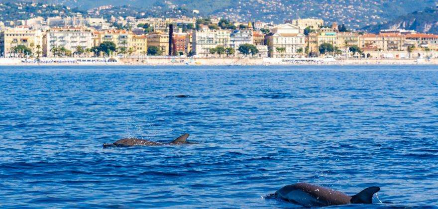 Responsible tourism: visit the French Riviera without polluting the sea!