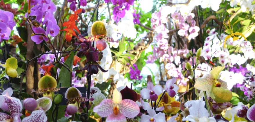 Thousand and one orchid - Le Jardin des Plantes
